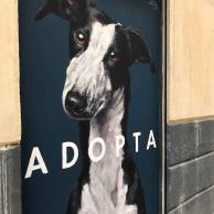 calle_lavapies_adopta